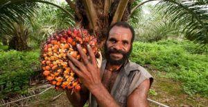olio-di-palma-problemi