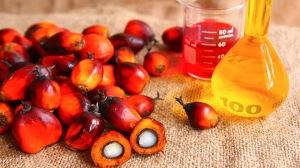 olio-di-palma-problematiche-ambientali