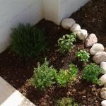 piante-officinali-giardino